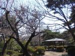 240329-21 大宮公園.jpg