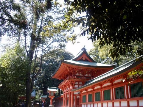 240329-44 大宮氷川神社.jpg
